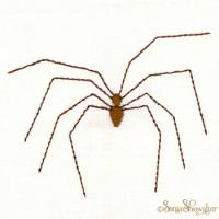 Daddy Long Legs ( Spider)