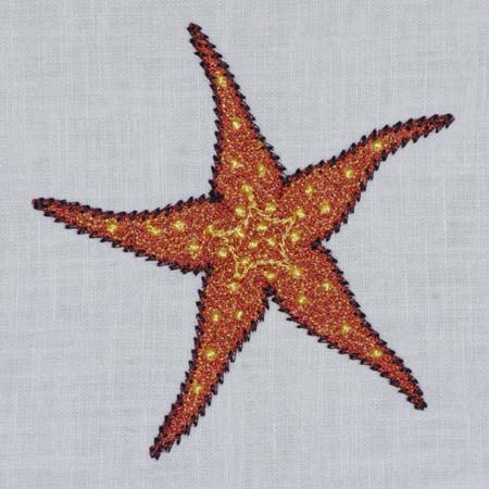 Sea Star ( Starfish)